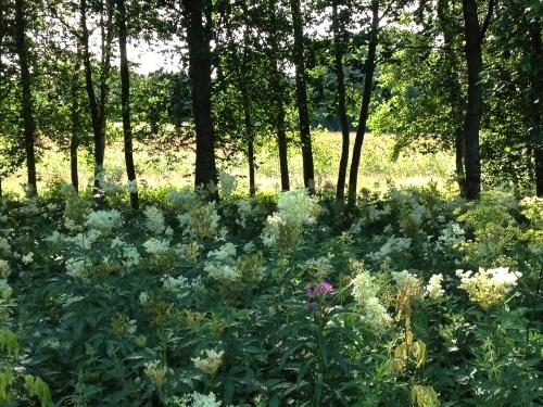 kukkia ja puita Maxmossa
